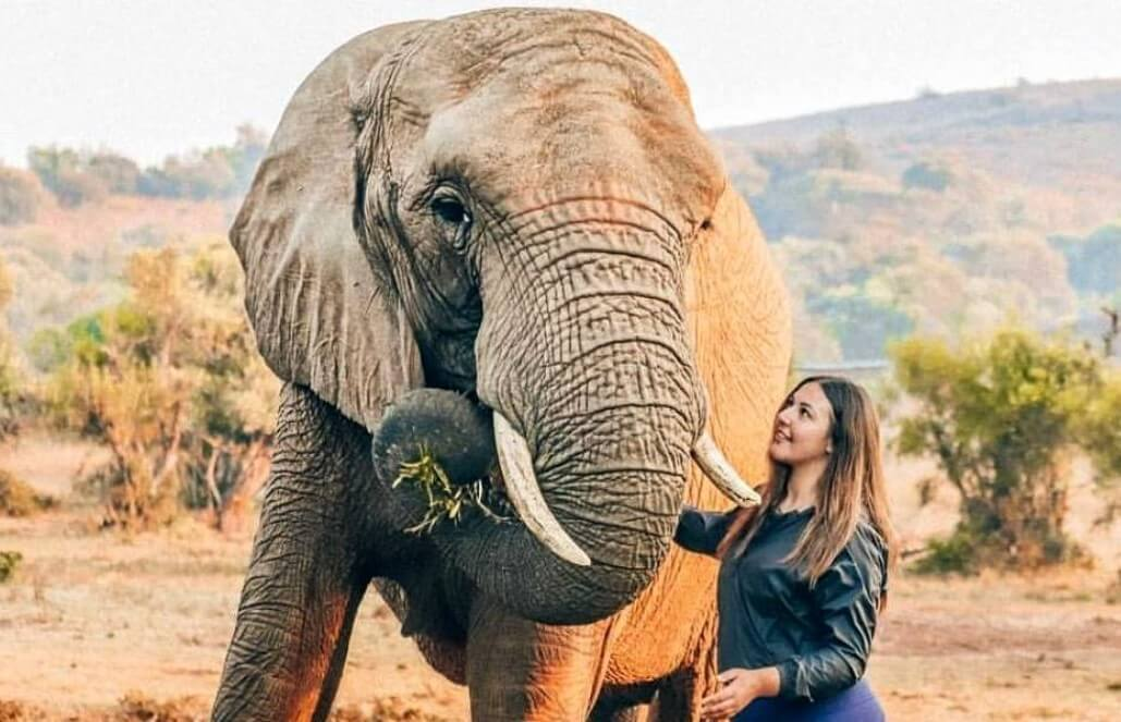 Elephant Conservation & Wildlife Volunteering Program in South Africa with GoEco