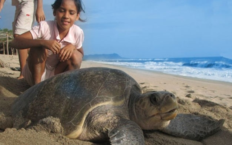 Sea Turtles Volunteering in Bali with IFRE Volunteers