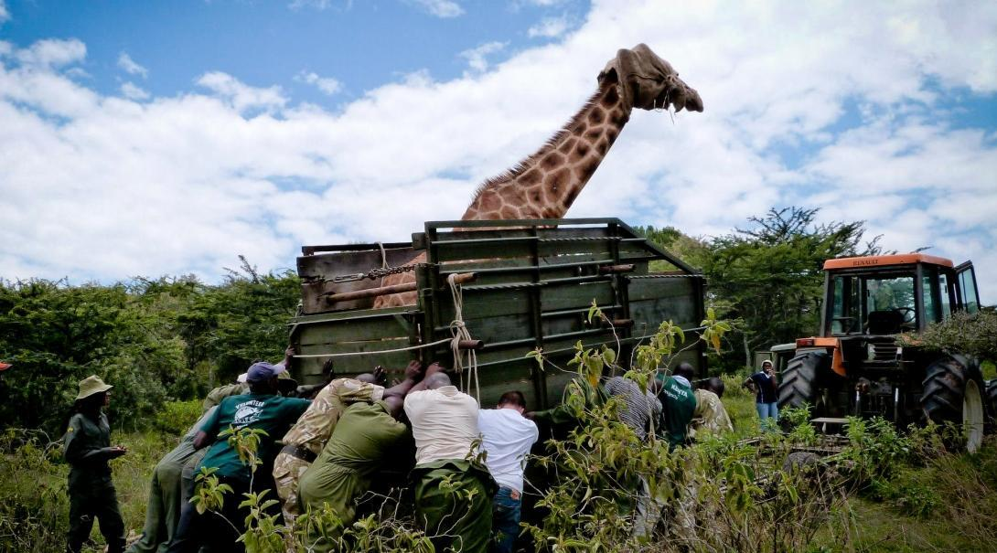 volunteer in kenya with projects abroad